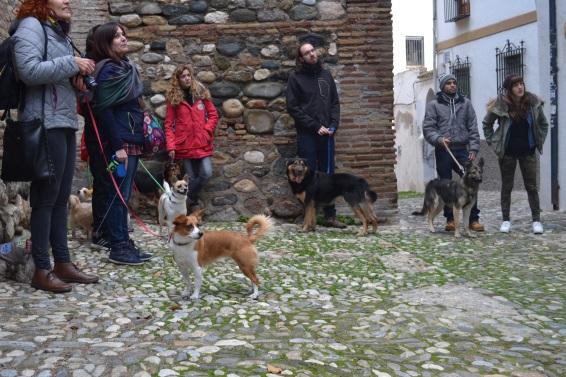Hasta los perros atienden las indicaciones de Eva sobre el Hotel Casa del Jazmín, en la Placeta de Porras